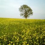 キガラシと哲学の木
