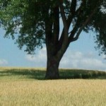 赤のペンキで大きく×印を書かれた哲学の木