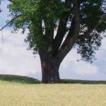×印が入った現在の哲学の木